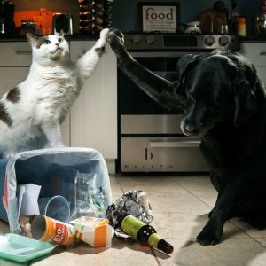 Cat and dog taking out the trash