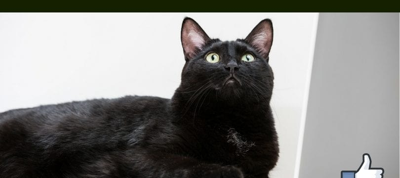 Cat is sitting on a computer looking up at a banner that reads how to make a facebook carousel ad